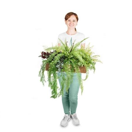 К379 Зеленый микс с папоротником Экзальтатой (латекс) в кокосовом боксе 50*20*h10
