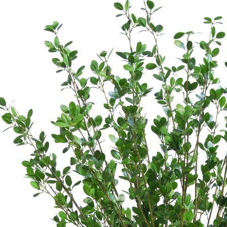 ККДД180/200(з.) Кокедама d40см Дерево с распускающимися листочками h180см