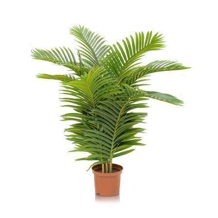 Пальмы и экзотические растения