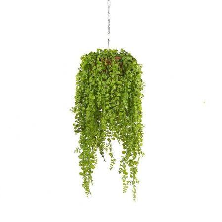 Зеленые растения в подвесном кашпо