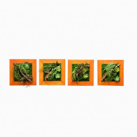 СКФ06/1(з.) Фитокартина с папор.и суккулент.(50х50см) в оранж.раме