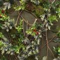Фитостена 67(з.) с ягодами