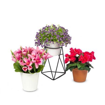 Цветущие растения в кашпо