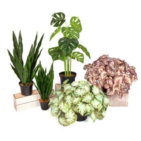 Зеленые растения в кашпо
