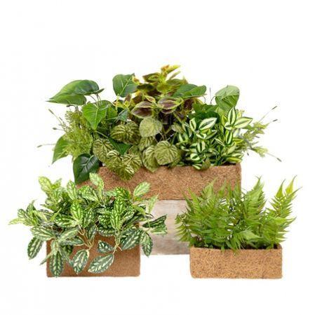 Зеленые растения в ящиках и боксах