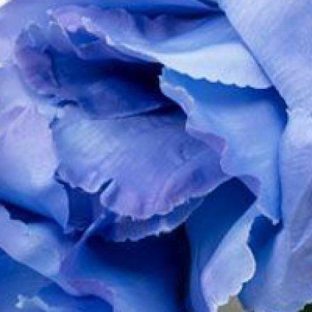 Синие, голубые