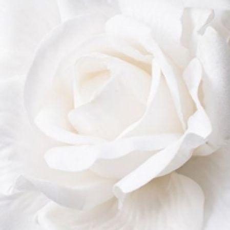 Белые, кремовые