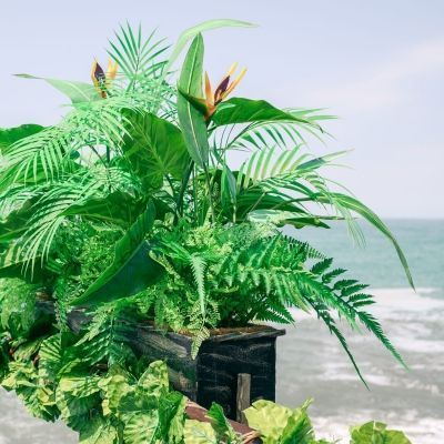 Пляж Коралл   Сочи